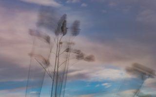 014 Strå i vind